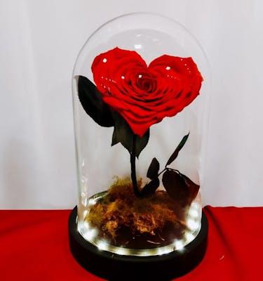 Forever Rose Heart XL
