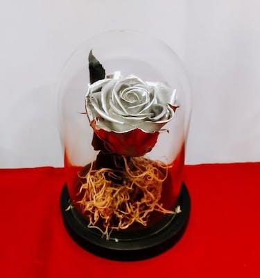 Silver Forever Rose