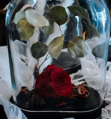 Σύνθεση Καμπάνα Forever Rose