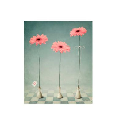 Ευχετήρια Κάρτα Χωρίς Μήνυμα Flowers