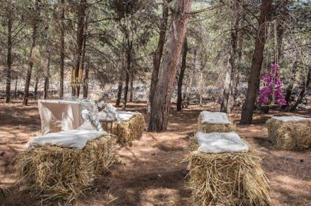Γάμος στο Δάσος
